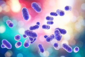 bacteria Porphyromonas gingivalis